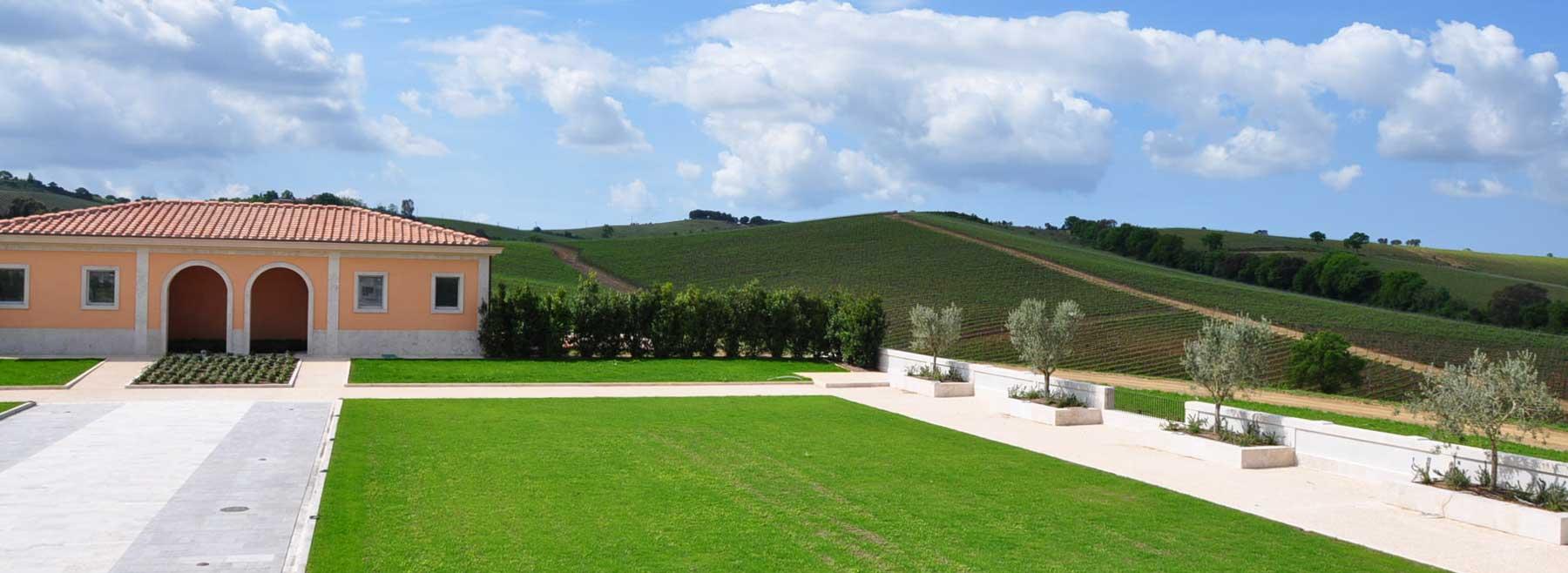 progettazione cantina vinicola alcuni esempi